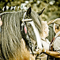 Buy canvas prints of Old Friends by tony golding