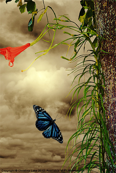 A Sometimes Summer Canvas print by Christine Lake