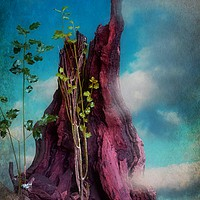 Buy canvas prints of Surreal In Nature by Christine Lake
