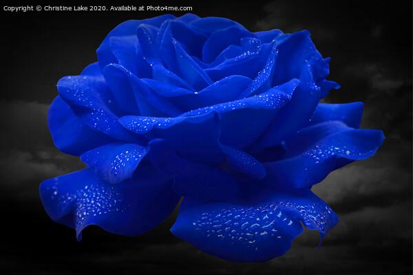 Rose Blue Acrylic by Christine Lake
