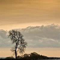 Buy canvas prints of Winter Tree by David Lewins (LRPS)