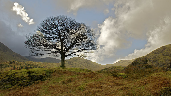 Hardknott Tree Framed Mounted Print by Robert Geldard