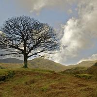 Buy canvas prints of Hardknott Tree by Robert Geldard