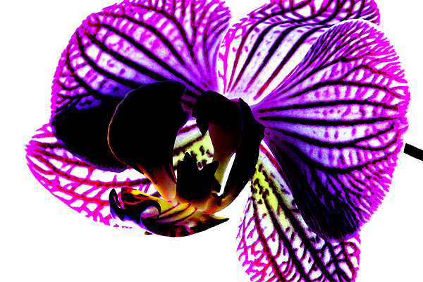 Orchid Canvas print by Ian Jeffrey