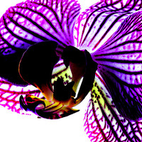 Buy canvas prints of Orchid by Ian Jeffrey