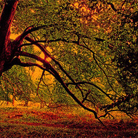 Buy canvas prints of Branches by Ian Jeffrey