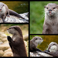 Buy canvas prints of Otters by Ian Jeffrey