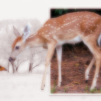 Buy canvas prints of Curious by Ian Jeffrey