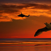 Buy canvas prints of Two Birds At Sunset by Ian Jeffrey