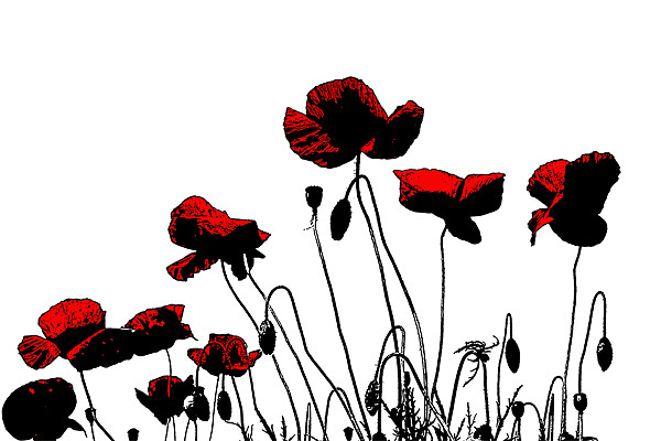 Painted Poppies Canvas print by Ian Jeffrey