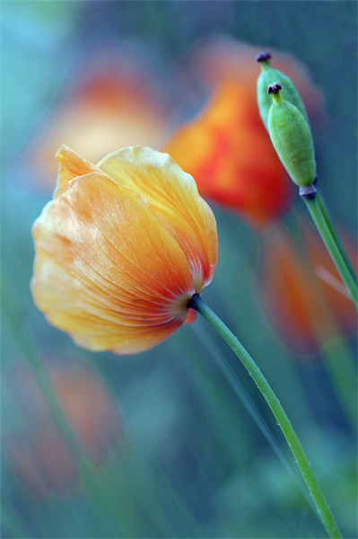Natures Colours Canvas print by Dawn Cox