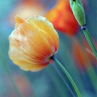 Buy canvas prints of Natures Colours by Dawn Cox