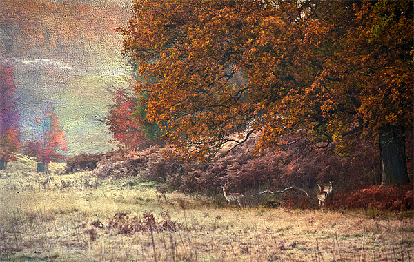 Autumn landscape Framed Mounted Print by Dawn Cox