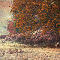 Buy canvas prints of Autumn landscape by Dawn Cox