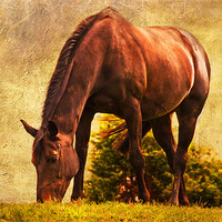 Buy canvas prints of Pastures new by Dawn Cox