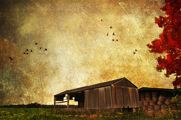 Old Barn. Canvas print by Dawn Cox