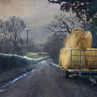 Buy canvas prints of Down the lane by Dawn Cox