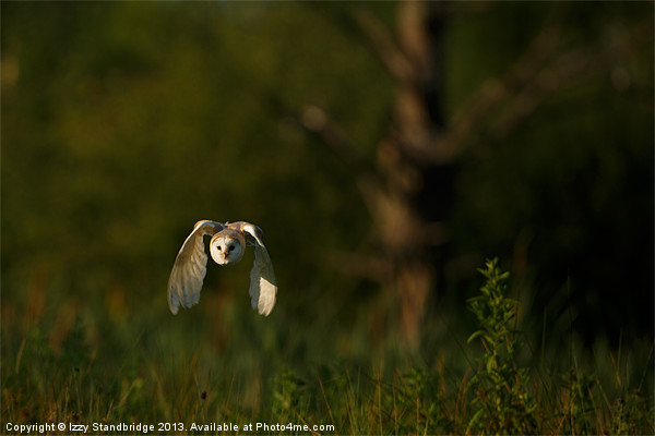 Barn owl flies through the last light Canvas print by Izzy Standbridge
