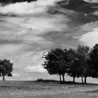 Buy canvas prints of trees by richard downes