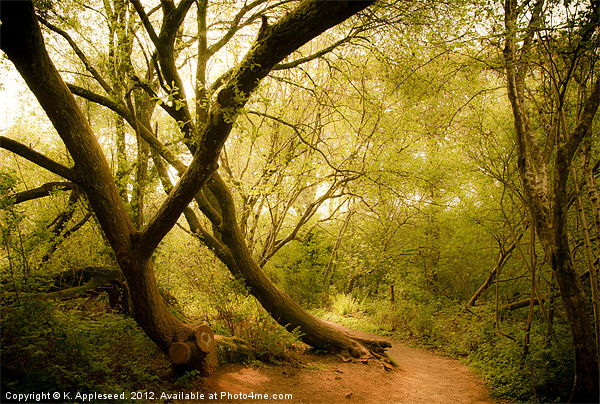 Occombe woods in spring Canvas Print by K. Appleseed.