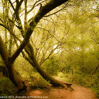 Buy canvas prints of Occombe woods in spring by K. Appleseed.