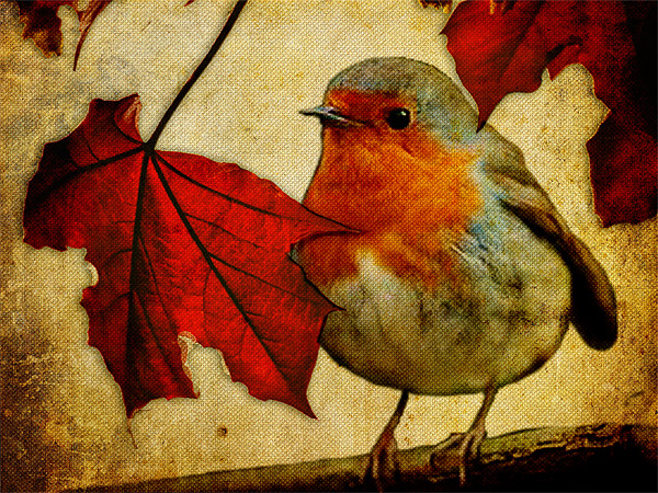 Robin and Red Leaves, Christmas... Canvas Print by K. Appleseed.