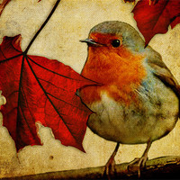 Buy canvas prints of Robin and Red Leaves, Christmas... by K. Appleseed.