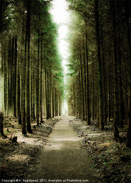 Haldon Forest, Through the Trees Canvas Print by K. Appleseed.