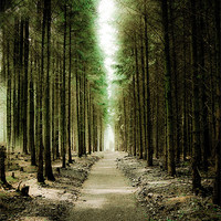 Buy canvas prints of Haldon Forest, Through the Trees by K. Appleseed.