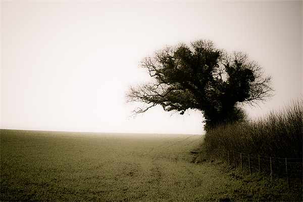 A Tree, a Field, a Hedge. Canvas Print by K. Appleseed.