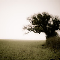 Buy canvas prints of A Tree, a Field, a Hedge. by K. Appleseed.