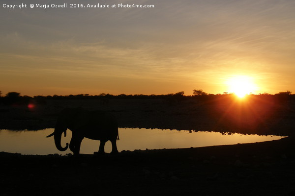 Sunset in Etosha Canvas Print by Marja Ozwell