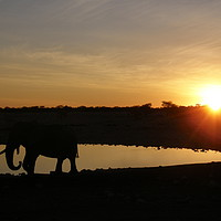 Buy canvas prints of Sunset in Etosha by Marja Ozwell