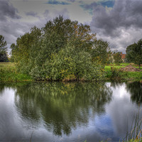 Buy canvas prints of Shrub Reflection by Chris Thaxter