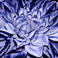 Buy canvas prints of The Blue Flower by Elaine Young