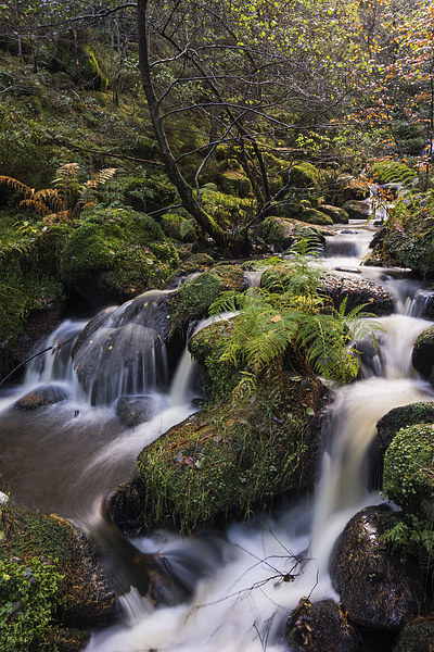 Wyming Brook Canvas print by James Grant