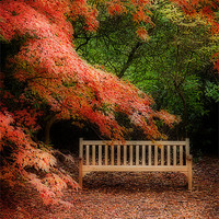 Buy canvas prints of The Park Bench by Paul Davis