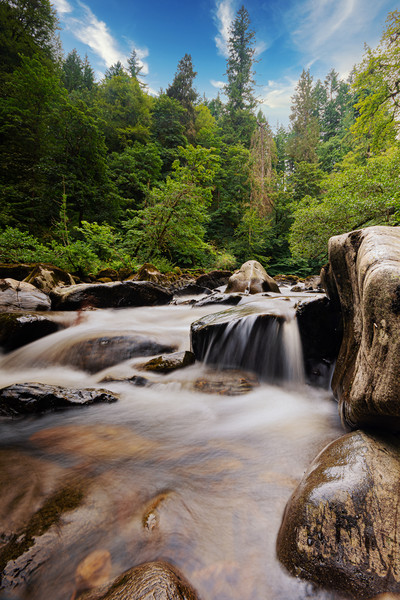 Forest River Canvas Print by Stuart Jack