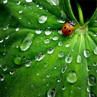 Buy canvas prints of ladybird on a rainy day by Heather Watkins