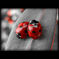 Buy canvas prints of ladybirds (rework with border) by Heather Watkins