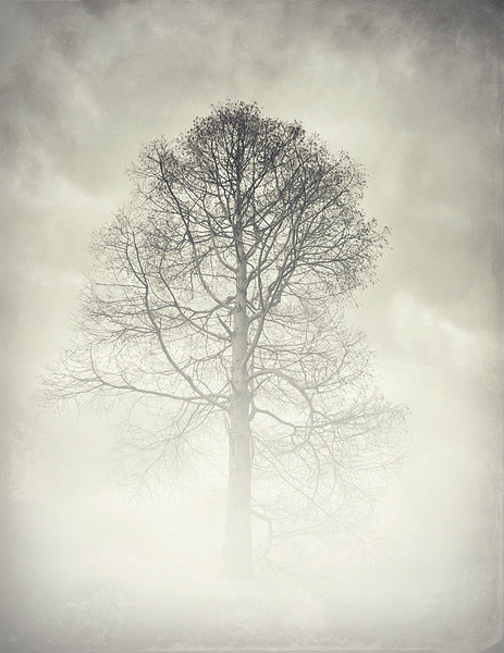 the winter tree Canvas print by Heather Watkins