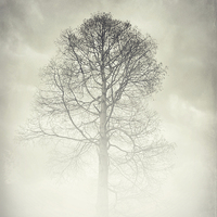 Buy canvas prints of the winter tree by Heather Watkins