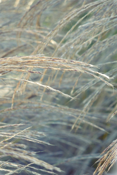 winter grass Canvas print by Heather Newton