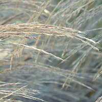 Buy canvas prints of winter grass by Heather Newton