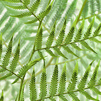 Buy canvas prints of landscape of ferns by Heather Newton
