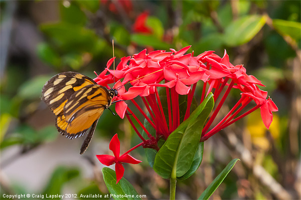 Red flowers with butterfly Canvas print by Craig Lapsley