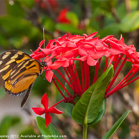 Buy canvas prints of Red flowers with butterfly by Craig Lapsley