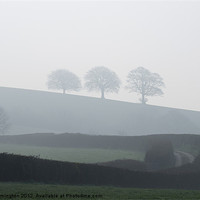 Buy canvas prints of Three trees in the mist by Pete Hemington