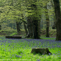 Buy canvas prints of Bluebells at Blackberry Camp by Pete Hemington