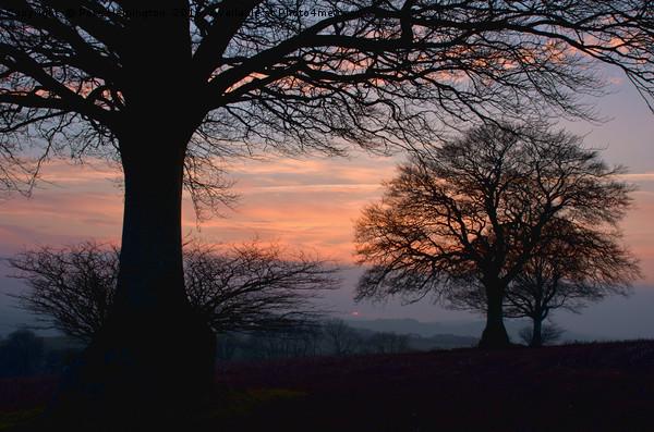 Sunset through the trees Canvas print by Pete Hemington